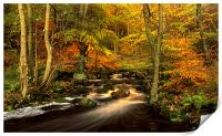 Autumn Glory in Padley Gorge, Print