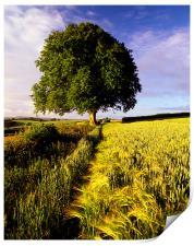 Oak and Barley, Print