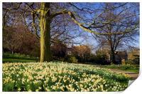 Sheffield Botanical Gardens in Spring, Print
