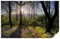 Bluebell Sunrise, Print