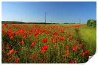 Poppies and Telegraph poles , Print