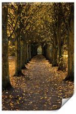 Autumn Avenue, Print