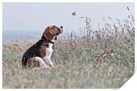 The Beagle, Print