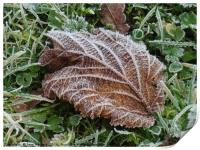 Frost on a Brown Leaf                        , Print