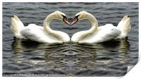 Mute Swan Heart, Print