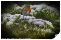 Winter Robin, Print