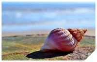 Seaside Sea shell, Print