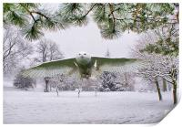 Snowy Owl In Winter Wonderland, Print