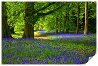 Bluebell Wood - Thorpe Perrow, Print