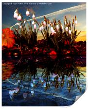 Snow Drop Reflections, Print