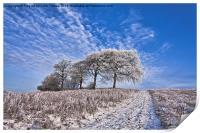 Trees in the snow Polarised, Print