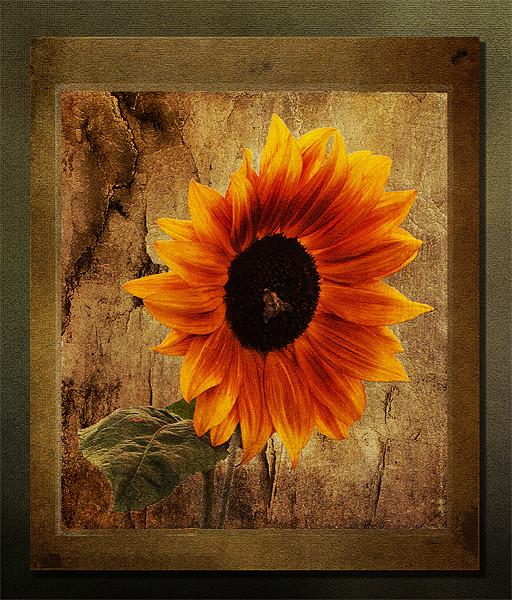 Sunflower Framed